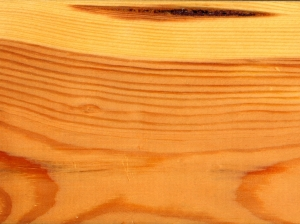 עץ אורן