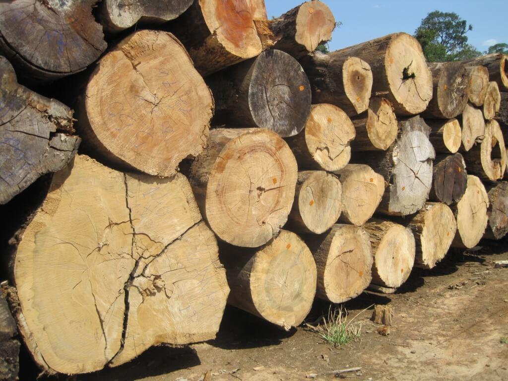 עץ איפאה ברזיל