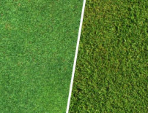 מה עדיף דשא טבעי או סינטטי?
